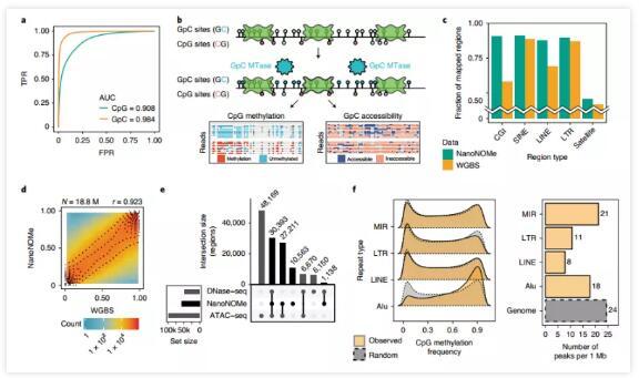 纳米孔测序新应用:揭示了乳腺癌细胞和非癌细胞间的表观遗传差异