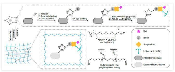 北京大学成功开发新型显微成像技术 可获得各种生物分子超分辨荧光图像