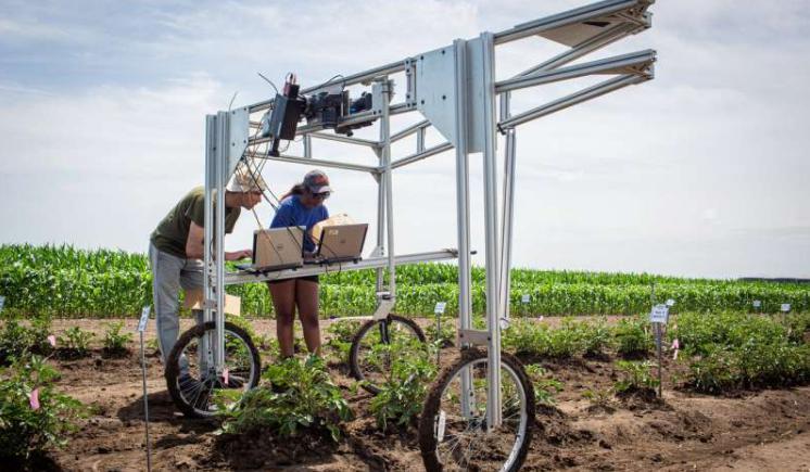 光合作用過程中發出的光信號可用于快速篩選農作物