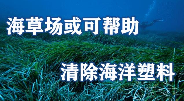 海草场或可帮助清除海洋塑料,或有助于对抗海洋塑料污染