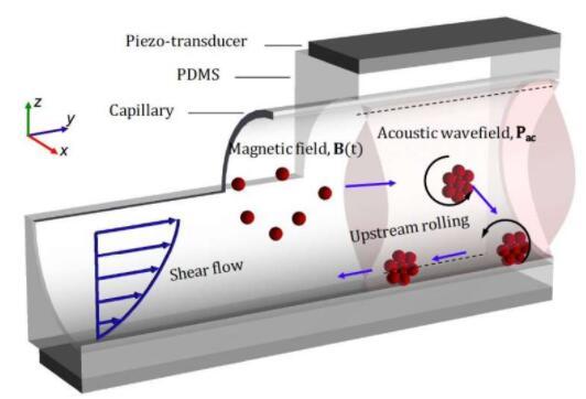 研究人员研发微型纳米机器人 可注入毛细血管定向治疗