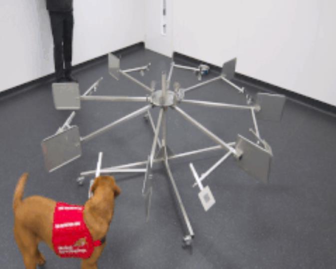 """麻省理工学院提出AI气味检测系统,""""狗鼻子""""也能闻出癌症?"""