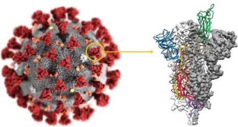 对于新冠病毒的突变不用太过于担心, FDA发布最新指南