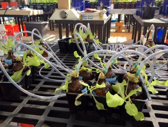 科学家研发测量植物组织中特定种类的碳纳米管水平的方法