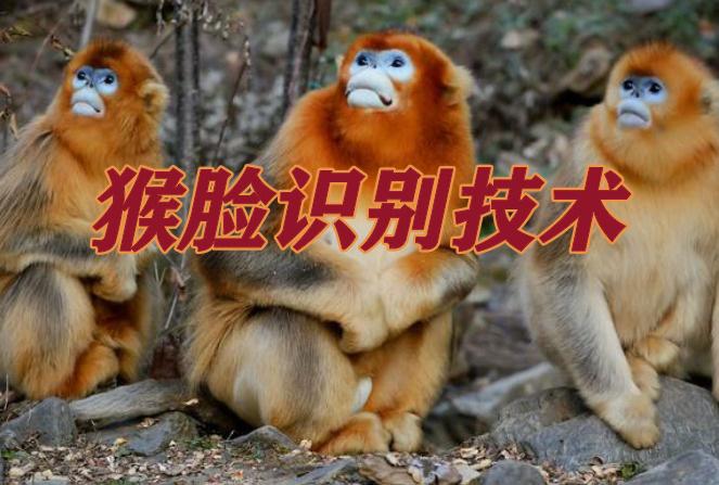 """""""猴臉識別""""技術,千萬只猴子都能區分,識別成功率達到了94%"""
