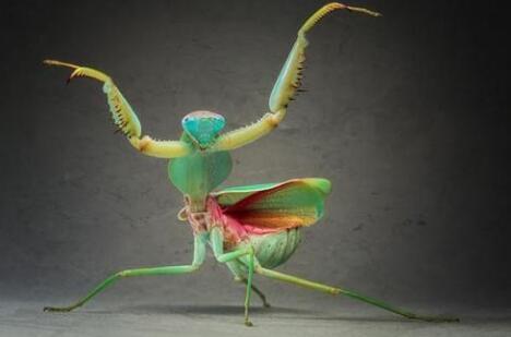 受螳螂虾眼睛启发的新型的光学传感器,可以装在智能手机上,进行高光谱和偏振成像
