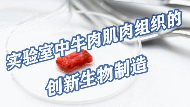 实验室中牛肉肌肉组织的创新生物制造,或满足未来的肉类需求