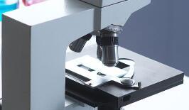 澳学者采用多光子显微镜技术,揭示了活体乳腺癌细胞的运作