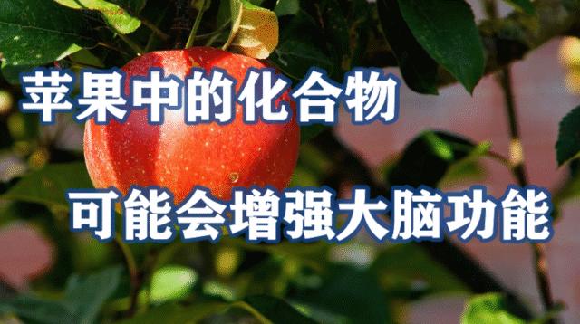 研究发现苹果中的化合物可能会增强大脑功能,这下苹果又得涨价了吧