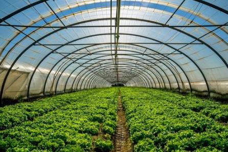 研究发现:未来有望在温室中使用透明太阳能电池板发电
