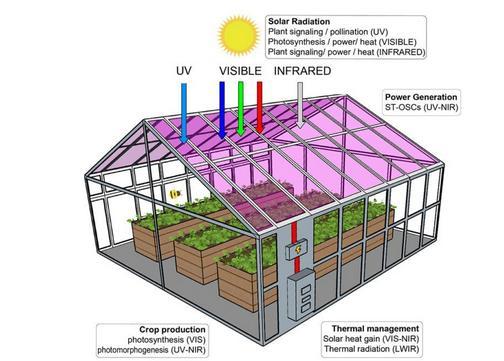 如何在太阳能温室里种植莴苣等作物
