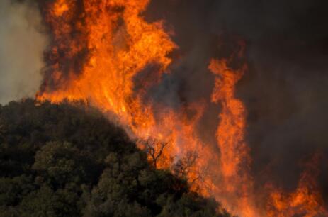 美国加州山火频发 拟引进人工智能监控预警山火爆发