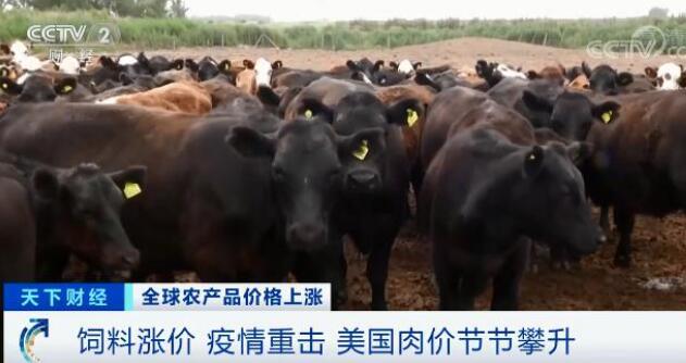 怎么办?高粱大涨 82.1%、玉米大涨 45.5% 还面临食品安全问题
