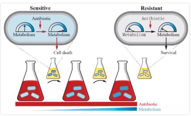 MIT首次发现核心基因的突变可以导致抗生素耐药