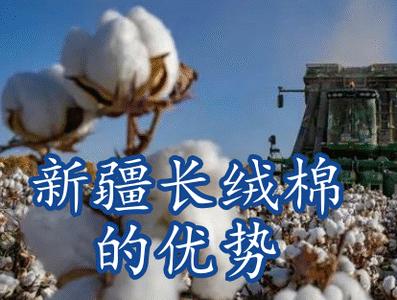 新疆长绒棉的优势是什么?品质世界顶级可不是吹出来的