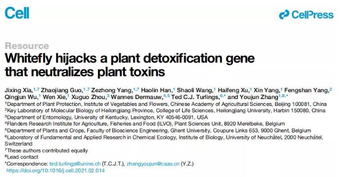 """农科院揭示烟粉虱""""吃遍""""植物界的机制:BtPMaT1基因很重要"""
