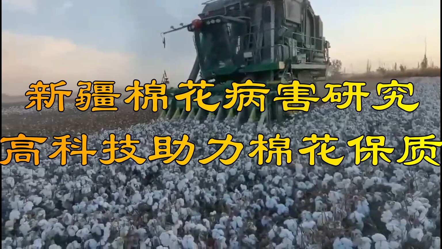 你所不知道的新疆棉花病害研究,高科技助力棉花保质