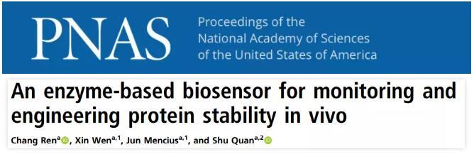 华东理工大学开发一种新型蛋白质体内稳定性检测探针