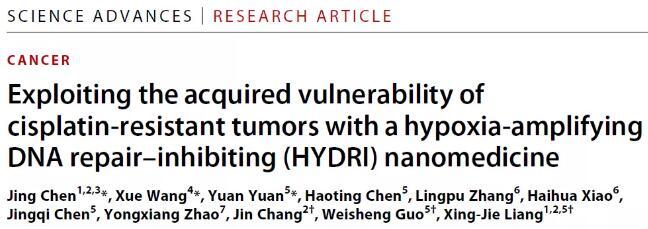 天津大学等开发了新型纳米化疗策略克服肿瘤顺铂耐药