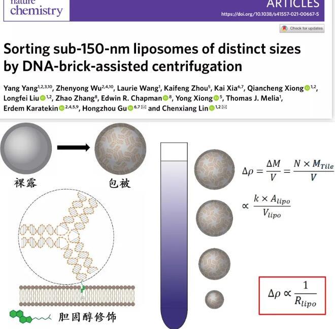 突破!耶鲁大学等开发利用DNA纳米组装体分选脂质体的新策略