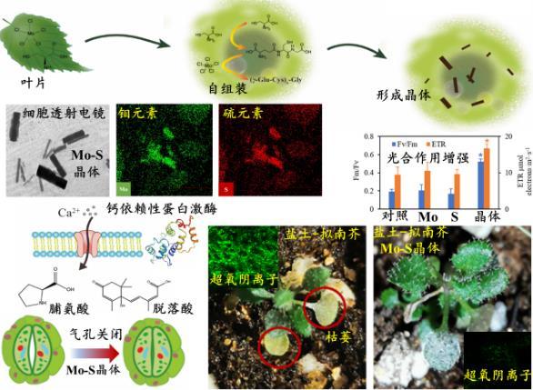 新型微纳米晶体解决盐土上植物难生长的问题