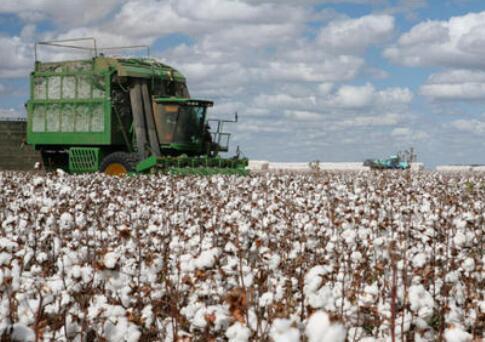棉花龙头新赛股份5连板后断头,采棉纺织机械成新热点