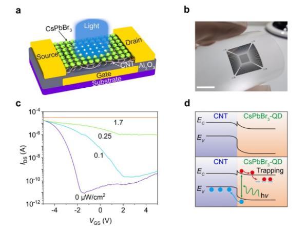 中科院等开发出一种柔性碳纳米管-量子点神经形态人工视觉光电传感器