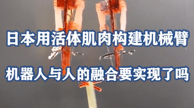 日本用活体肌肉构建机械臂,机器人与人的融合要实现了吗?