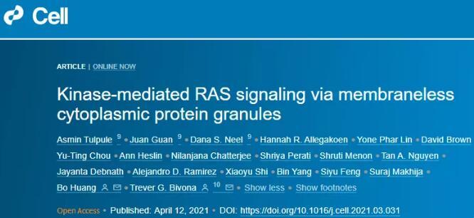 黄波等发现新型亚细胞结构:该结构可以组织癌症中的信号传导