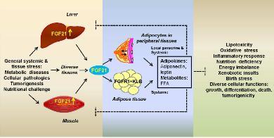 全球首个!东阳光GLP-1/FGF21双特异性融合蛋白获批临床