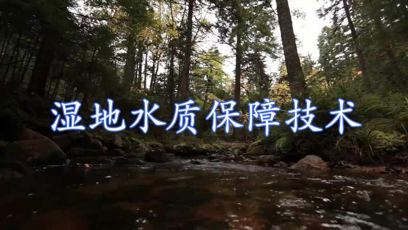 大地的肾脏、天然水库和天然的物种库——湿地