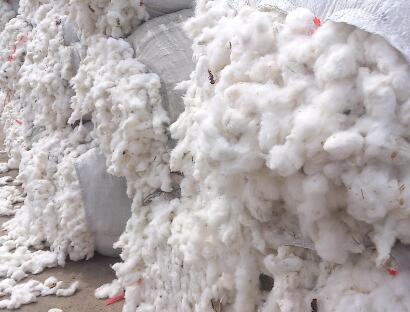 新疆兵团突破机采籽棉水杂难题,可在3分钟内完成单批次检测