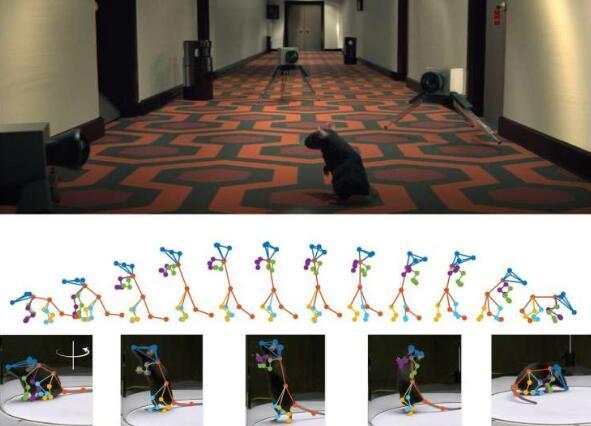 3D深层神经网络可以对拍摄的动物行为进行建模