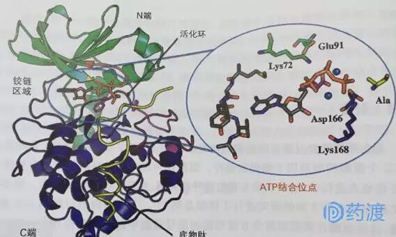 蛋白激酶抑制剂的作用和设计技巧