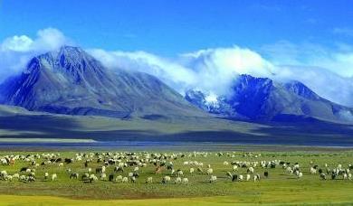 最新研究显示:南亚季风中断促青藏高原植被生长