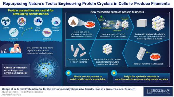 细胞内纳米3D打印机:从细胞内蛋白质晶体合成稳定的细丝