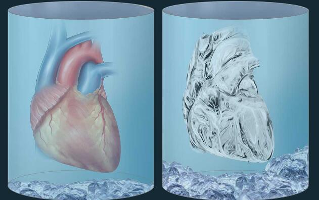 科学家发现低温储存生物组织的新方法,将器官的寿命延长27小时