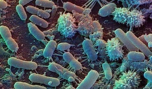 新研究显示:纳米抗体可以通过阻断蛋白质阻止细菌劫持细胞