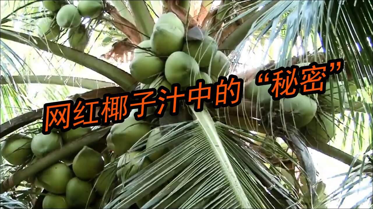 被夸爆的网红椰子汁,但你真的了解椰子汁吗