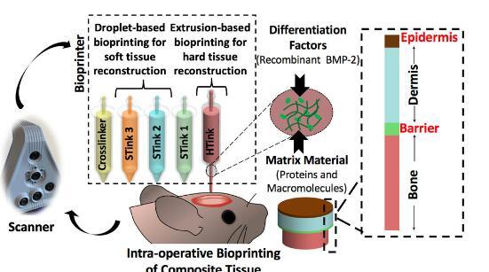 可同時進行的皮膚和骨骼修復的生物3D打印技術