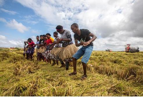 世界需要紧急行动:气候变化或危及全球三分之一粮食产量