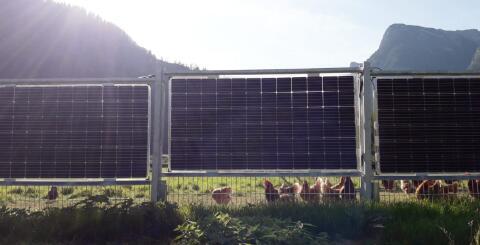 将太阳能与围栏相结合?德国创企推出双面太阳能围栏,成为农业光伏的理想选择