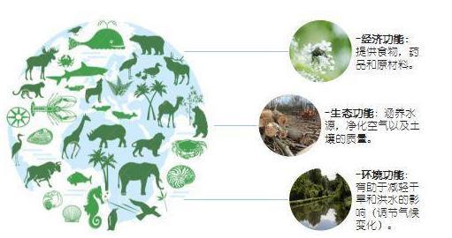 我国生物多样性保护成效显著 生态环境持续向好