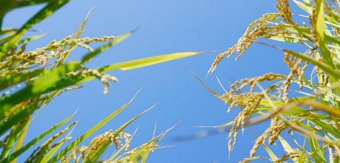 节粮减损等同于粮食增产 推进节粮减损需要各环节全面发力