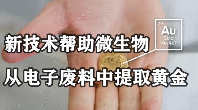 点废成金:新技术帮助微生物从电子废料中提取黄金