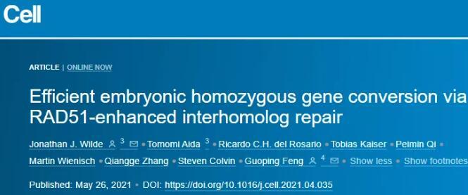 MIT发现同源间修复机制显著增加小鼠胚胎中Cas9介导的纯合敲除