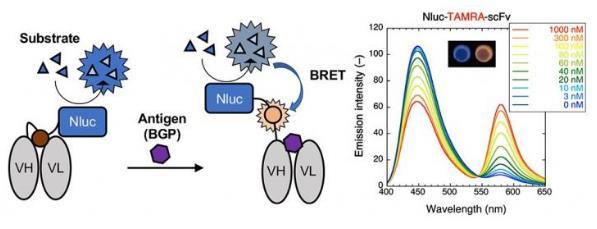 用于免疫测定测试的新型免疫传感器来了 成为有前途的工具