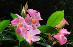 植物也怕高温?扬州大学等发现高温可改变植物DNA的分子结构