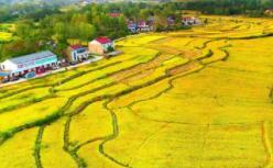 十月稻田 B 轮融资获得 14.5 亿元,深耕产业链获资本认可