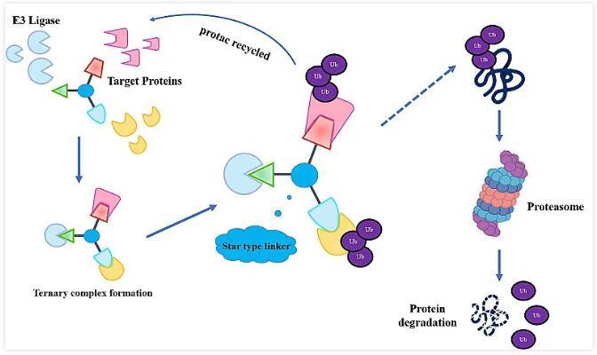 我国学者提出双重靶向降解药物设计新概念,在细胞水平降解癌细胞内的EGFR和PARP蛋白